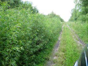 Going north towards Kirkpatrick Swamp